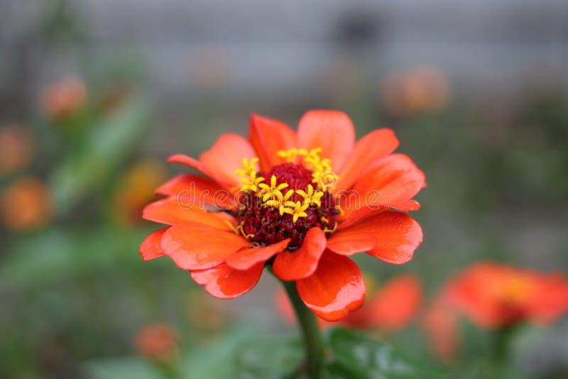 从哥斯达黎加的一朵花 库存照片