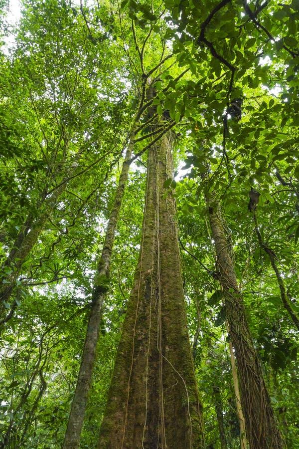 哥斯达黎加的雨林 免版税图库摄影