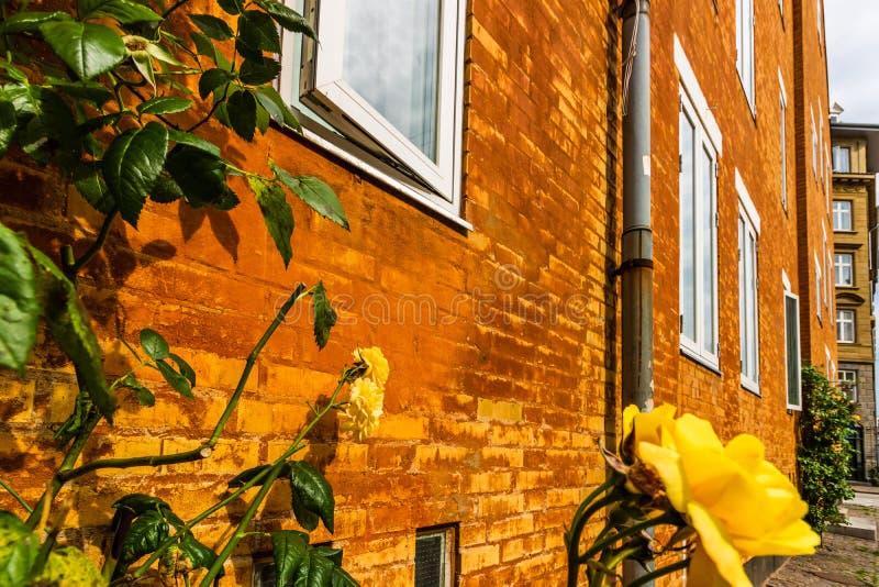 哥本哈根,丹麦- 2019年 老砖瓦房在哥本哈根,丹麦 在前景的黄色花 图库摄影