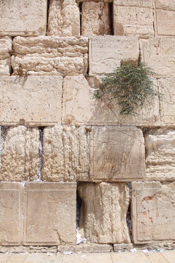 哭墙,耶路撒冷,以色列 免版税库存照片