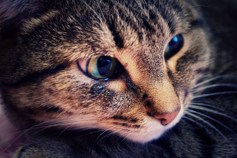 哭泣的猫 库存照片