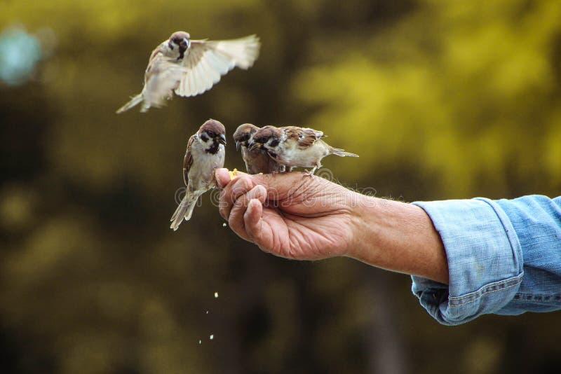 哺养的鸟 免版税库存照片