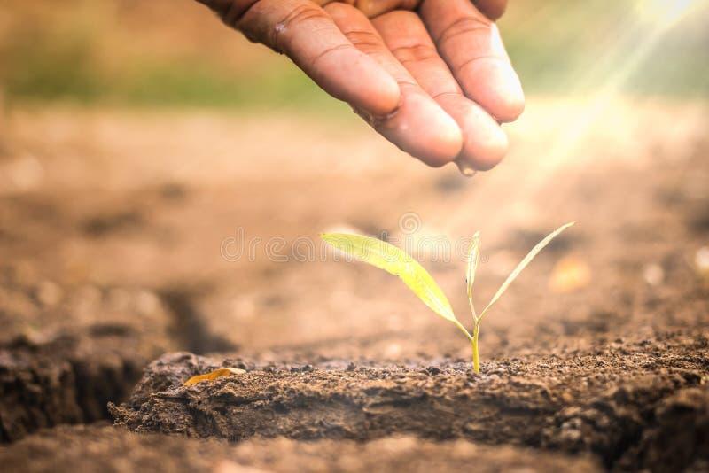 哺育和浇灌年幼植物/爱的手和保护nat 库存照片