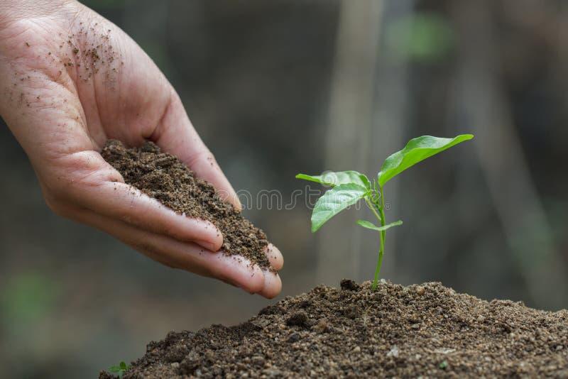 哺育树的农夫的手生长在沃土,增长的幼木,手维护保护树,植物树 免版税库存图片