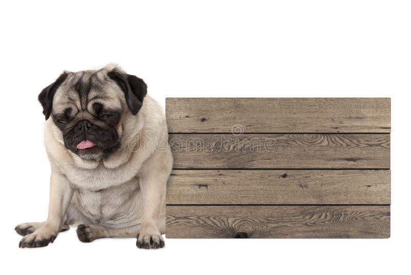 哺养哈巴狗坐下在空白的木标志旁边的小狗 免版税图库摄影