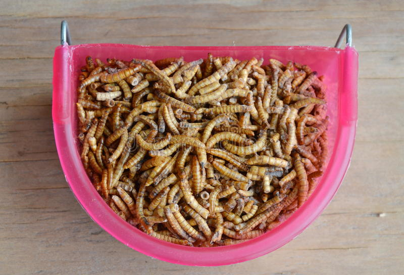 哺养的啮齿目动物和鸟的干蠕虫与在宠物碗的蜥蜴 免版税库存照片