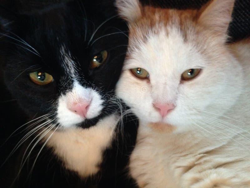 唐纳德和芒果 库存图片