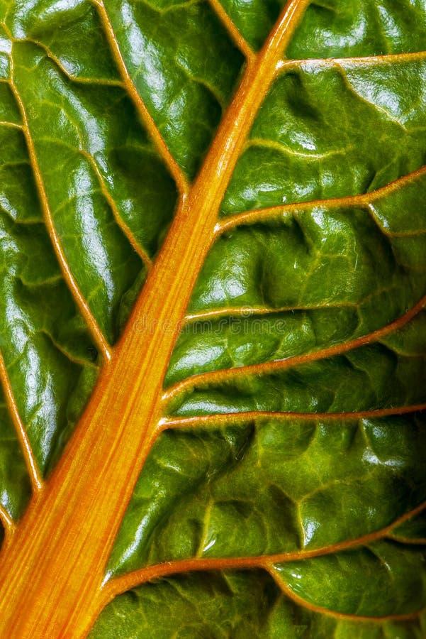 唐莴苣瑞士牛皮菜新鲜的叶子特写镜头  库存照片