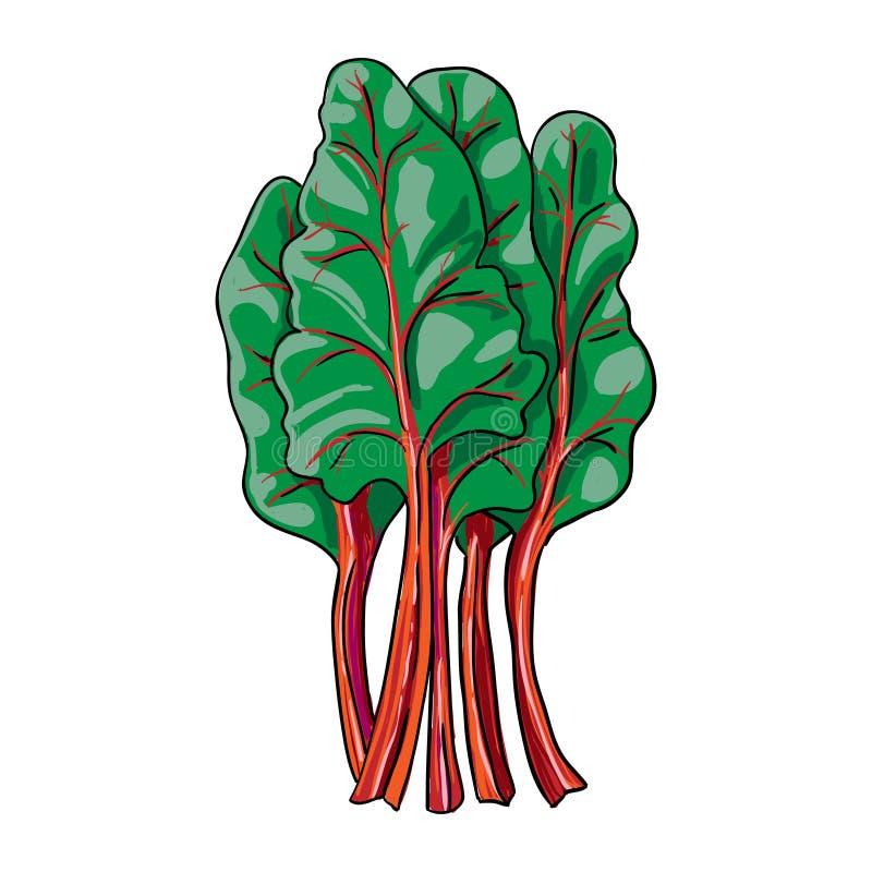 唐莴苣-被隔绝的手拉的菜 向量例证