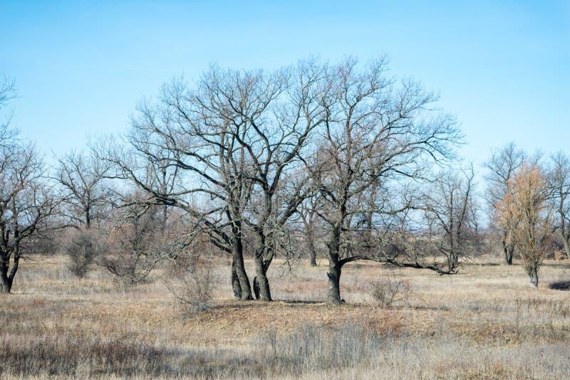 唤醒在冬天冬眠以后的自然 库存照片