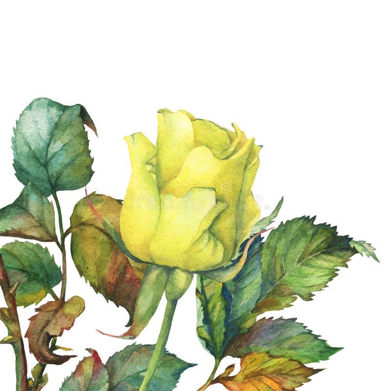 唯一与绿色叶子的美丽的金黄黄色玫瑰 皇族释放例证