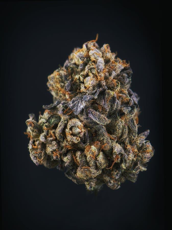 唯一大麻芽& x28; 莓果努瓦尔strain& x29;隔绝在黑色 图库摄影