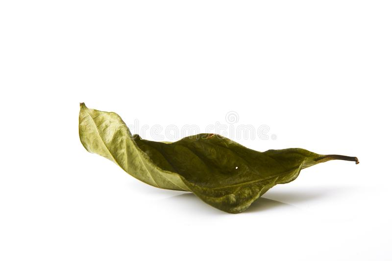 唯一干燥绿色叶子叶子 免版税库存照片