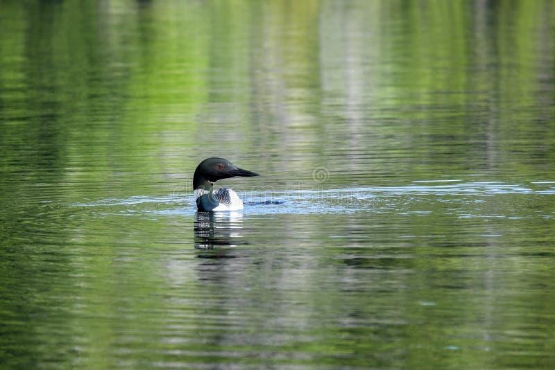 唯一懒人在湖 库存照片