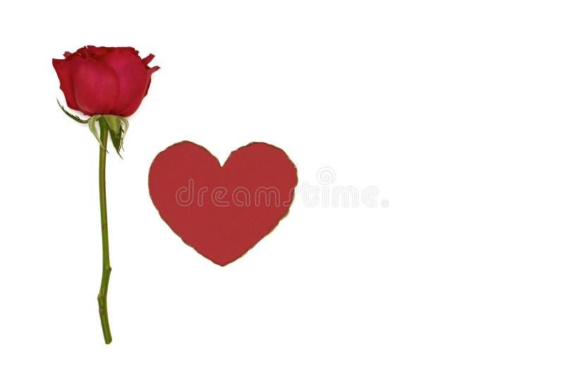 唯一新红色玫瑰和红色爱形状 库存图片