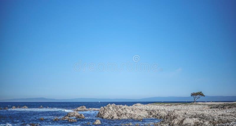 唯一树在岩石站立在纯净的蓝天下 免版税库存照片