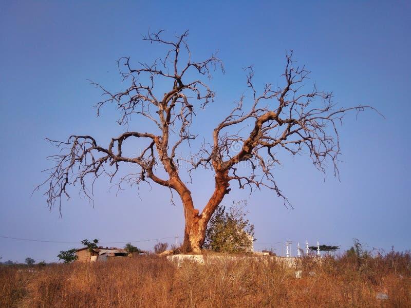 唯一树惊奇 图库摄影