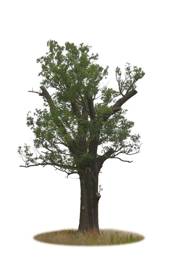 唯一树 免版税库存照片