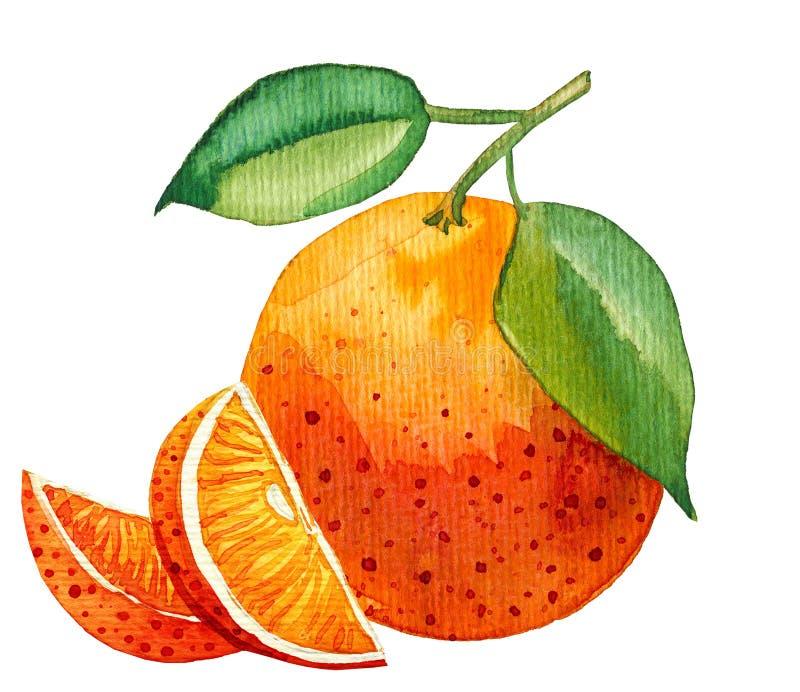 唯一桔子水彩绘画与少量切片的 库存例证