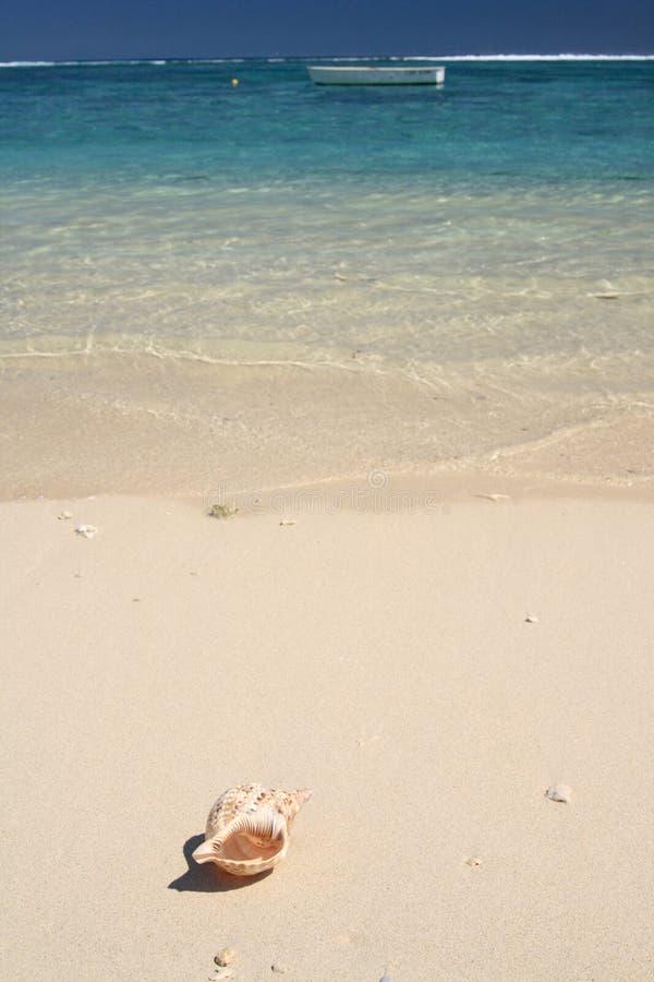 唯一海滩的壳 免版税库存图片
