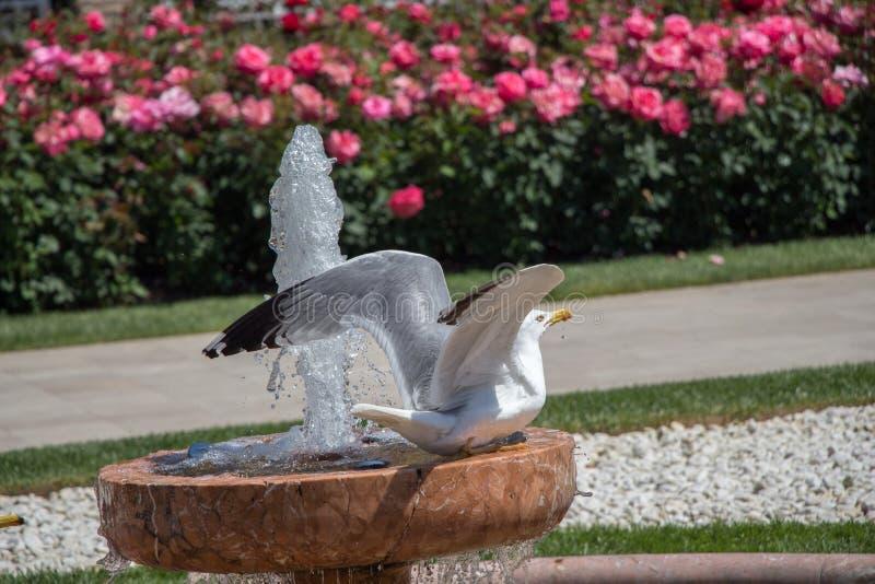 唯一海鸥在公园 图库摄影