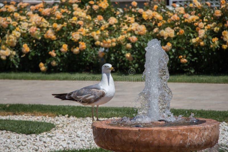 唯一海鸥在公园 库存照片