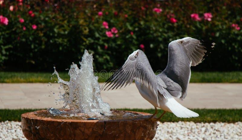 唯一海鸥在公园 免版税库存照片