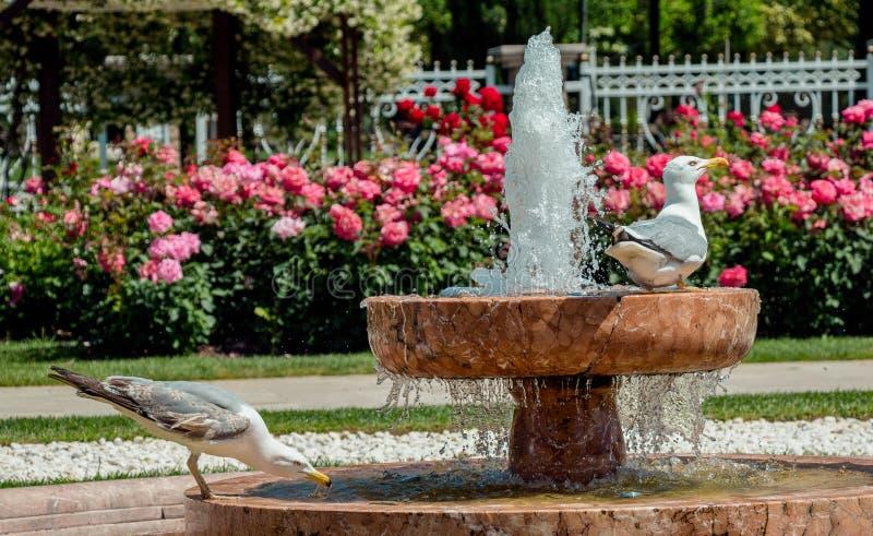唯一海鸥在公园 免版税库存图片