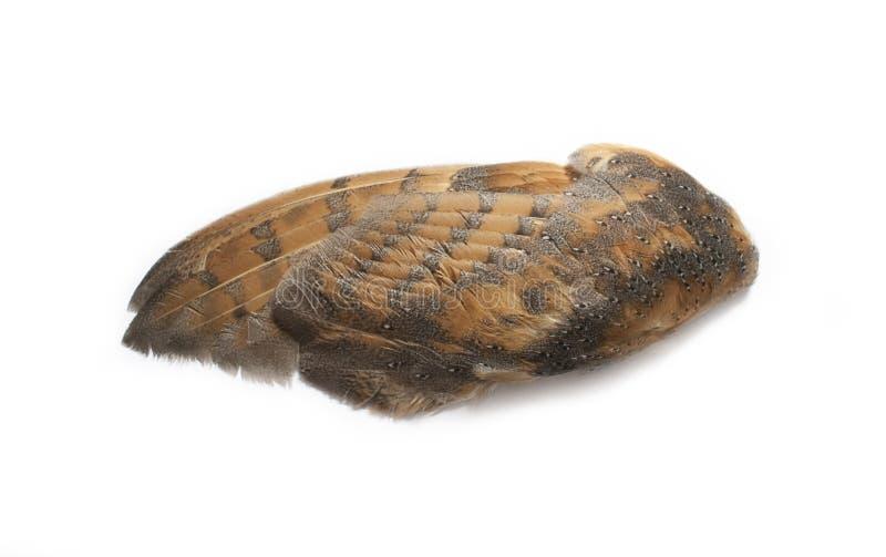 唯一猫头鹰翼 免版税图库摄影