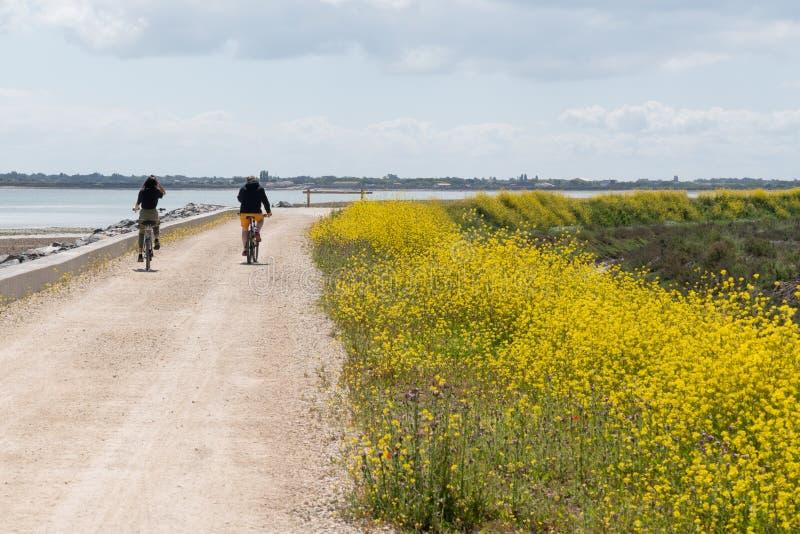 唯一男人和一年轻女人Ile de Re自行车道路的  库存照片