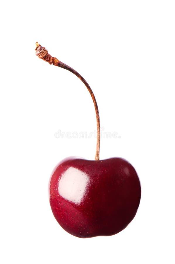 唯一的樱桃 免版税图库摄影