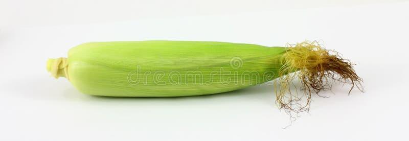 唯一的玉米 库存照片