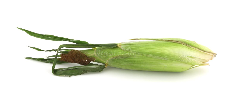 唯一的玉米 库存图片