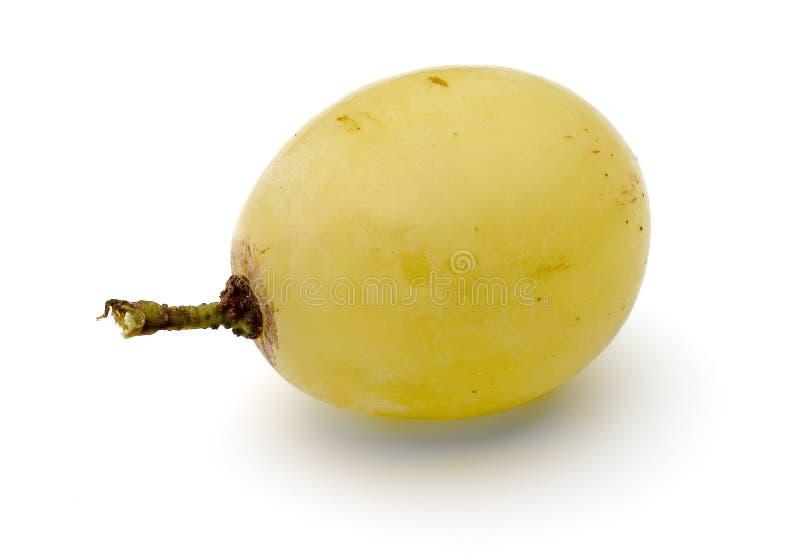 唯一的葡萄 免版税库存照片