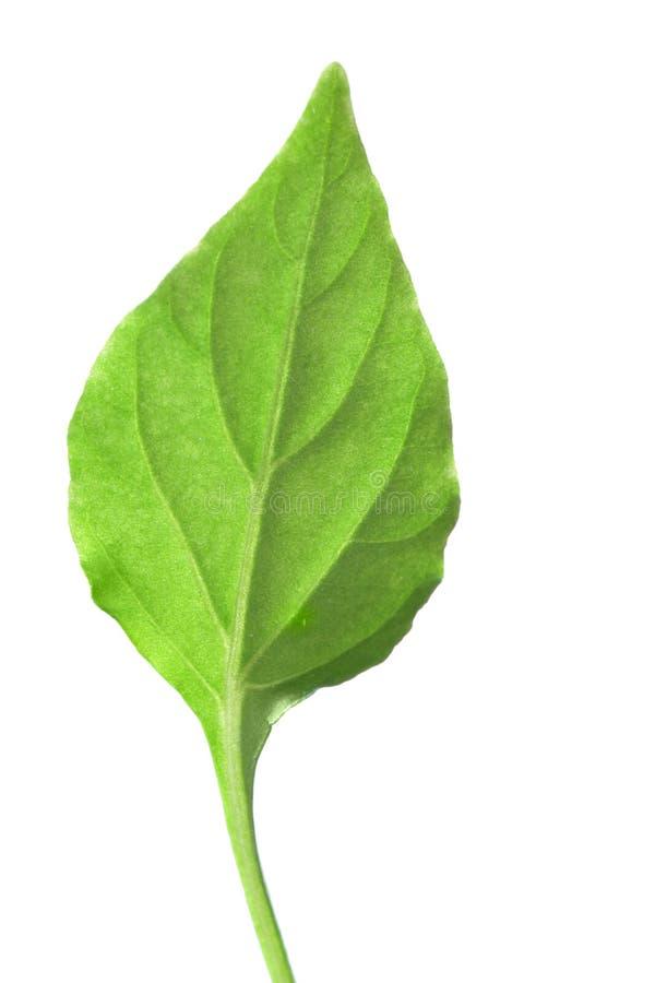 唯一绿色的叶子 库存照片