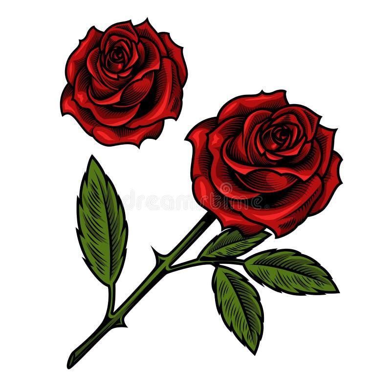 唯一美丽的红色玫瑰 库存例证