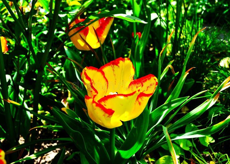 唯一被隔绝的美术静物画明亮的五颜六色的宏观花画象 库存照片