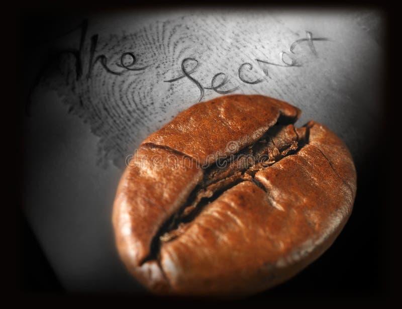 唯一豆的咖啡 免版税库存照片