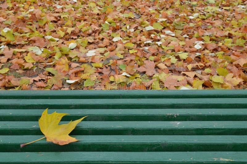 唯一黄色叶子在绿色长木凳说谎 库存图片