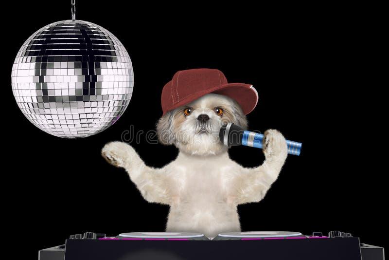 唱与话筒在夜总会的Shitzu狗一首卡拉OK演唱歌曲--隔绝在黑色 库存图片