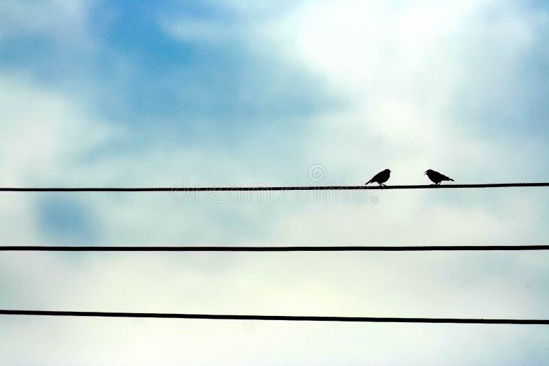 唱歌在输电线的鸟 免版税库存照片