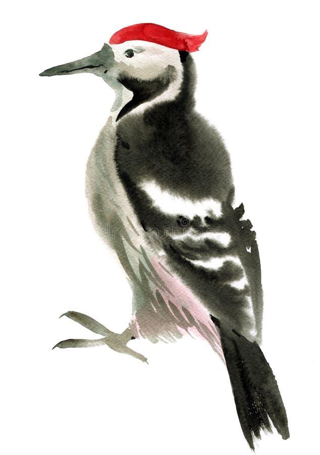 啄木鸟的水彩例证 免版税库存照片