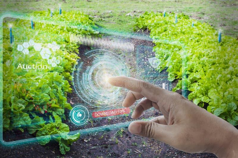 商人使用手指接触接口屏幕,拍卖农产品现代无线网络5G技术,与农场 免版税库存图片
