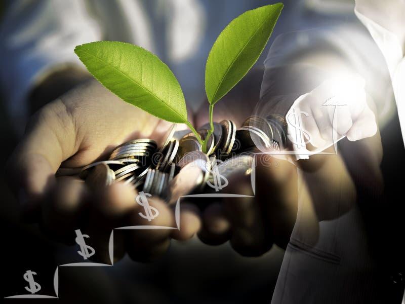 商人点两次曝光手指和金钱植物在手中生长硬币,生长金钱概念 免版税库存照片