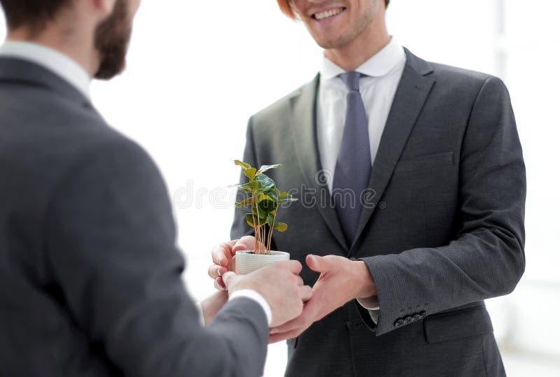 商务伙伴拿着年轻幼木 免版税库存图片