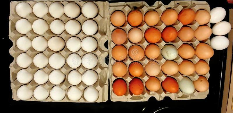 商店买来的鸡蛋对 农厂新鲜的鸡蛋 免版税库存照片