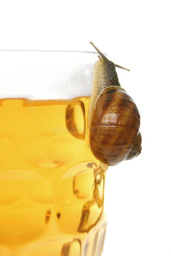 啤酒蜗牛 图库摄影