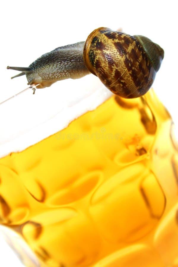 啤酒蜗牛 免版税库存照片