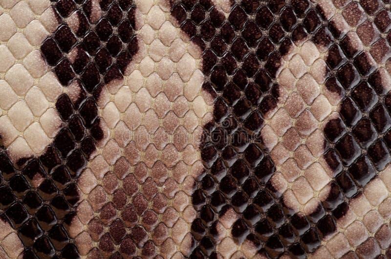 啪答声皮肤蛇 库存照片