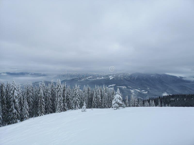 喀尔巴阡山冬季森林 免版税库存照片